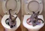 medium_cat_1.jpg